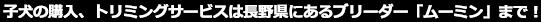 子犬の直販・販売、トリミングサービスは長野県にあるブリーダー「ムーミン」まで!